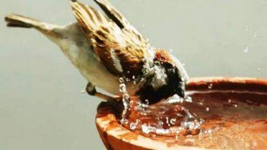 Photo of परई म पानी…..